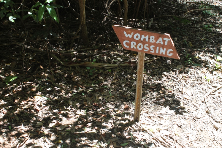 Watch out for wombats!