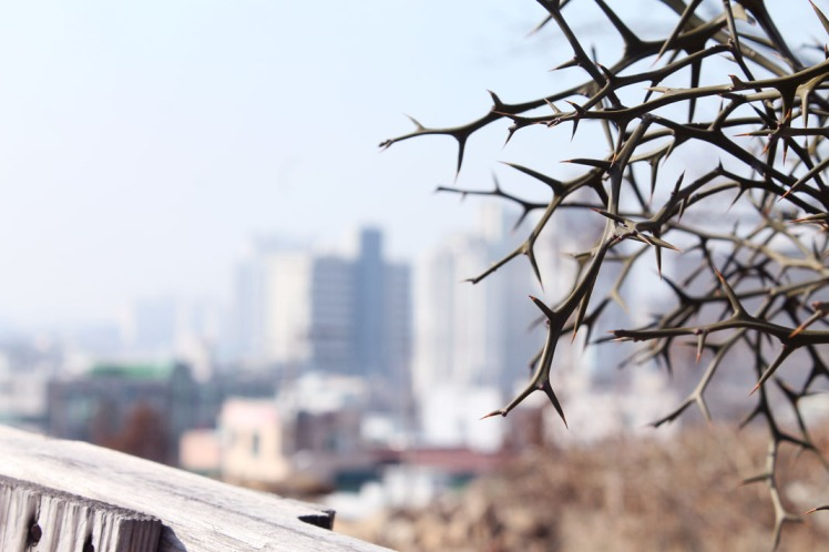 Cityscape behind a bare spring thorn bush.
