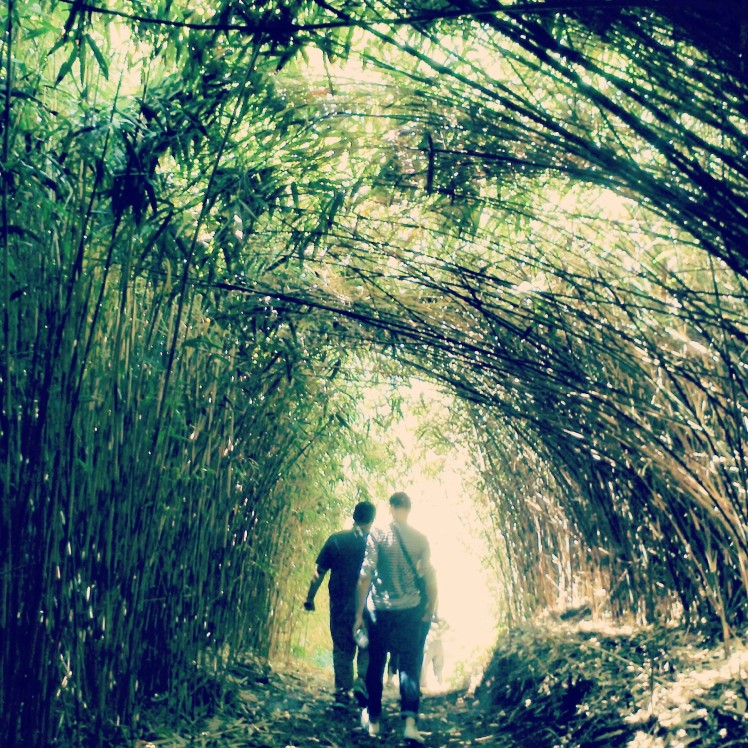 Bamboo forest trail.