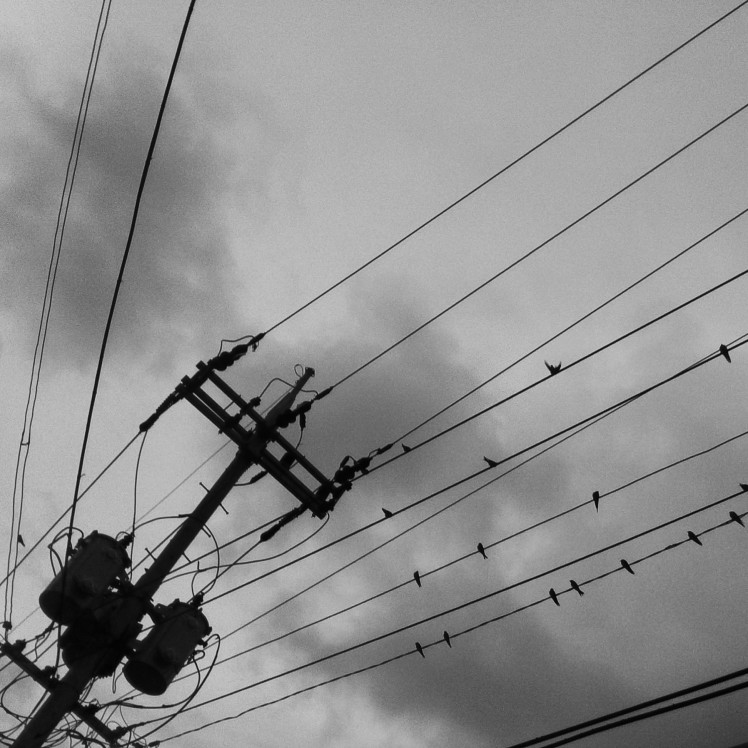 Birds on a wire while walking around town.