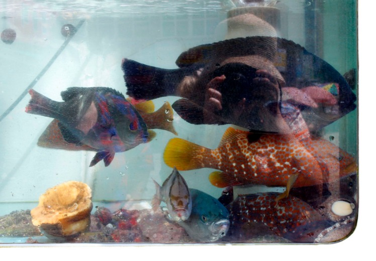 Selfie in tropically-coloured-fish tank reflection.