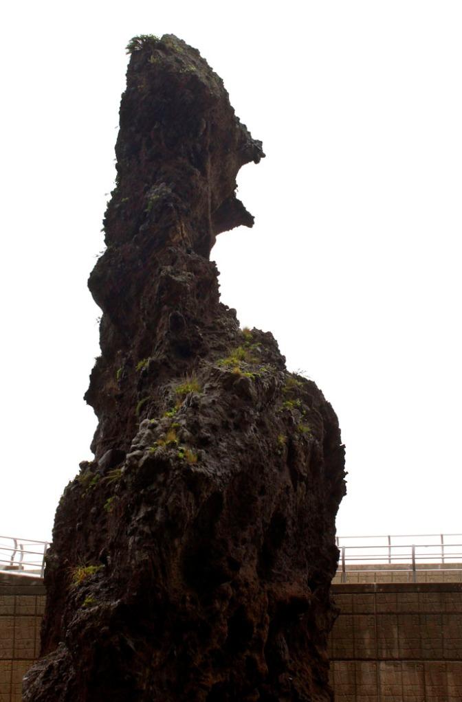 A rock that looks like a sea serpent.