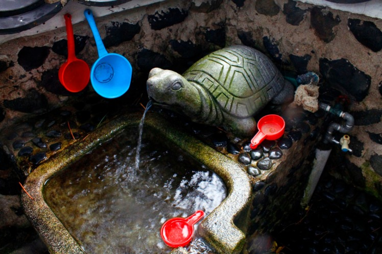 Turtle water fountain.
