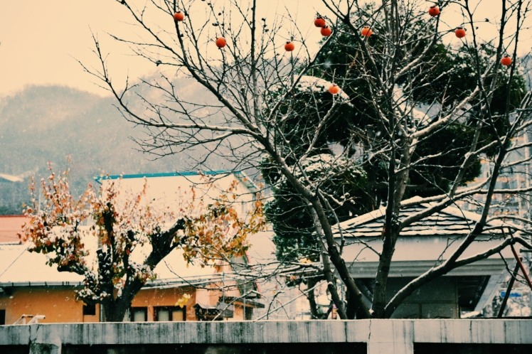View of snowcapped persimmons clinging to their tree as I step outside my apartment building.