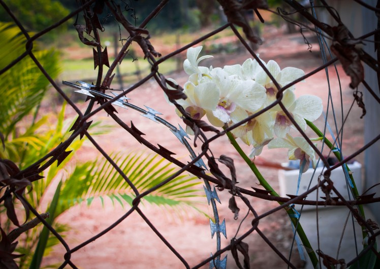 Barbed wire fence enclosing the Killing Fields. Photo by Ricky.