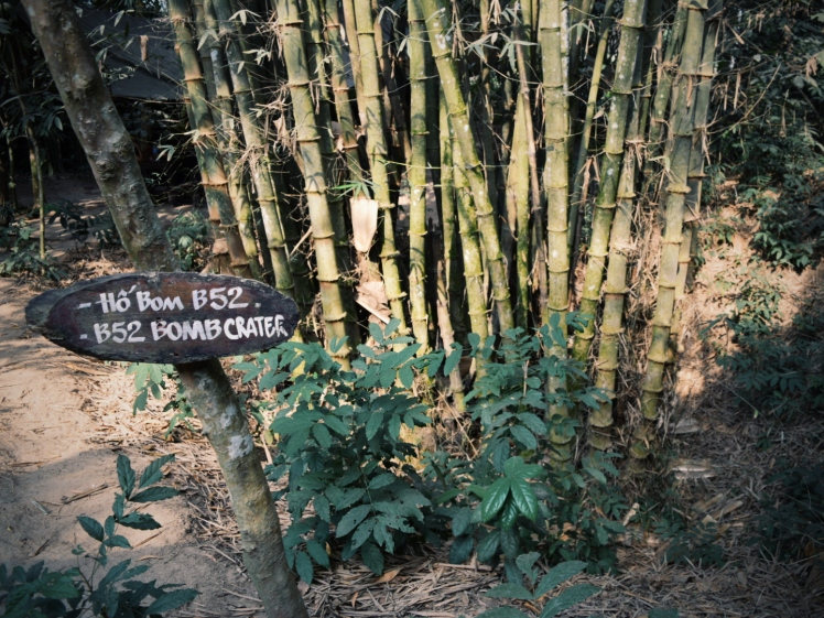 Bamboo cluster growing out of an old bomb crater.