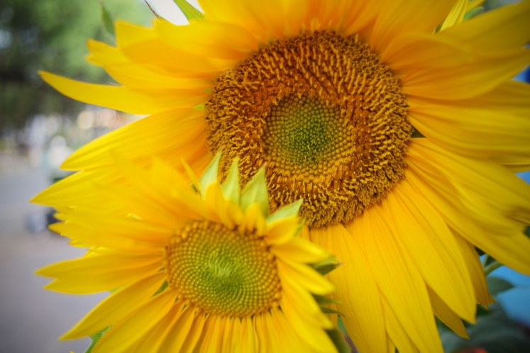 Sunflowers being my favourite flower, I was quite biased in enjoying this holiday's choice of décor.