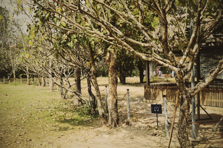 Tree line marks the border of the Killing Fields.