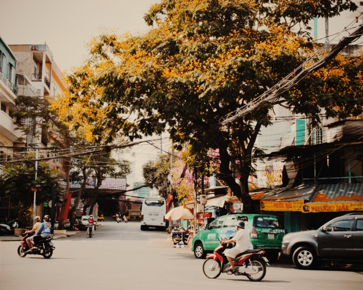 Gorgeous old tree blooming bright yellow flowers as though it itself was celebrating the Lunar New Year.