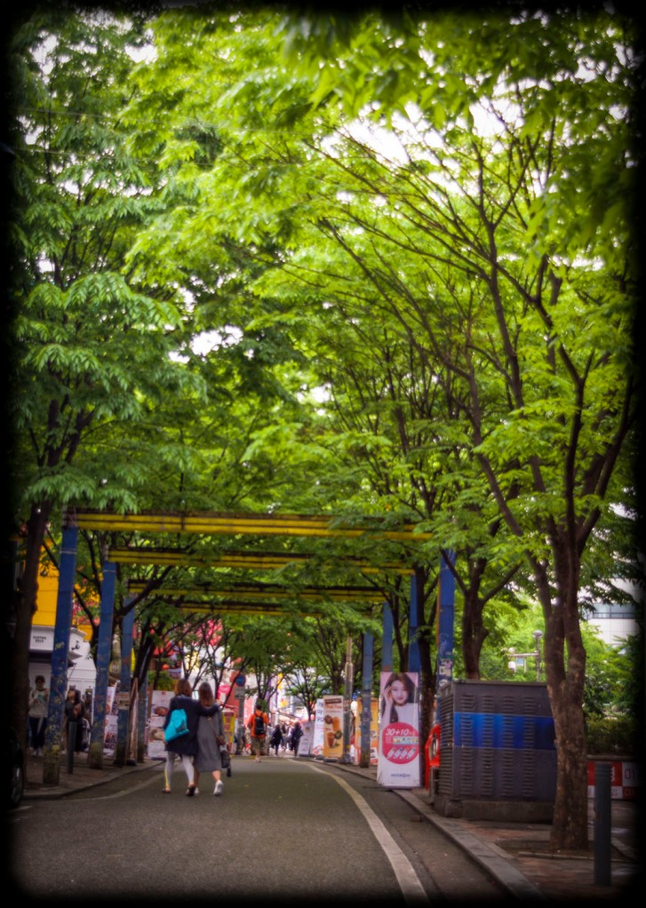 Perhaps my favourite part of Hongdae - tree archways over the central road.