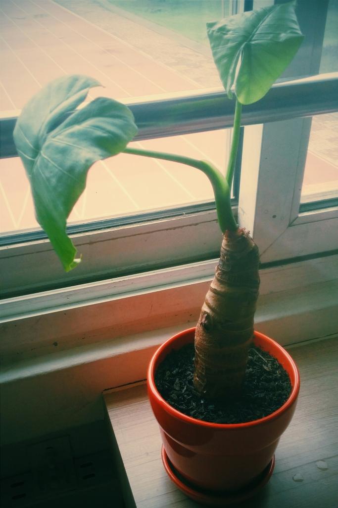 Goodbye, faithful plant.