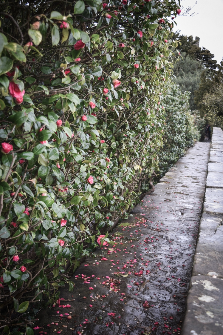 2016 Battle Abbey Precipice of Camellia Hedges small
