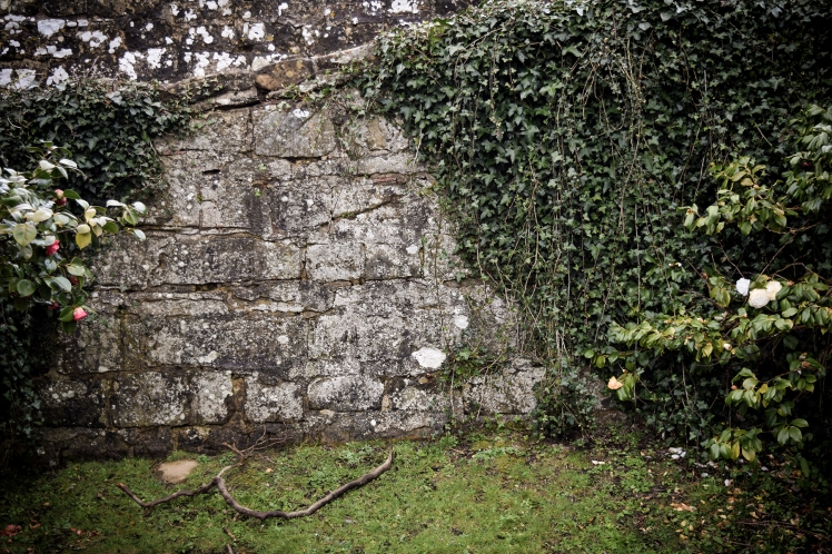 2016 Battle Abbey Stone Wall Ivy small