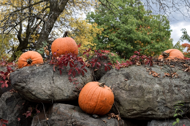 2016 Granby Zoo Pumpkins small.jpg