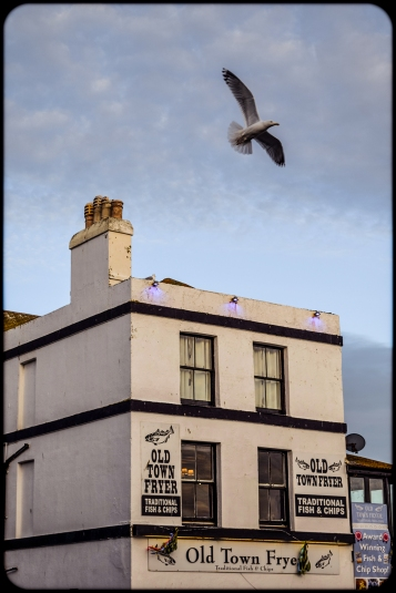 2016 Old Town Fryer Seagull Flying small